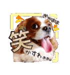 キャバリアのちゃんココvol.3優しい関西弁(個別スタンプ:03)