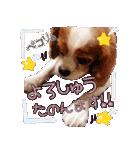 キャバリアのちゃんココvol.3優しい関西弁(個別スタンプ:04)