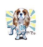 キャバリアのちゃんココvol.3優しい関西弁(個別スタンプ:05)