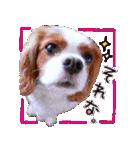 キャバリアのちゃんココvol.3優しい関西弁(個別スタンプ:06)
