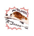 キャバリアのちゃんココvol.3優しい関西弁(個別スタンプ:08)