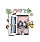 キャバリアのちゃんココvol.3優しい関西弁(個別スタンプ:10)