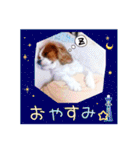 キャバリアのちゃんココvol.3優しい関西弁(個別スタンプ:11)