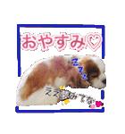 キャバリアのちゃんココvol.3優しい関西弁(個別スタンプ:12)