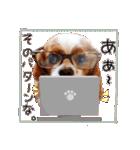 キャバリアのちゃんココvol.3優しい関西弁(個別スタンプ:13)