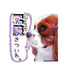キャバリアのちゃんココvol.3優しい関西弁(個別スタンプ:14)