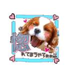 キャバリアのちゃんココvol.3優しい関西弁(個別スタンプ:15)