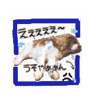 キャバリアのちゃんココvol.3優しい関西弁(個別スタンプ:16)