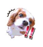 キャバリアのちゃんココvol.3優しい関西弁(個別スタンプ:17)