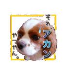 キャバリアのちゃんココvol.3優しい関西弁(個別スタンプ:18)