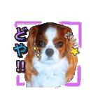 キャバリアのちゃんココvol.3優しい関西弁(個別スタンプ:19)