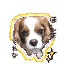 キャバリアのちゃんココvol.3優しい関西弁(個別スタンプ:20)