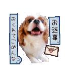 キャバリアのちゃんココvol.3優しい関西弁(個別スタンプ:21)