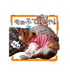 キャバリアのちゃんココvol.3優しい関西弁(個別スタンプ:24)