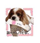 キャバリアのちゃんココvol.3優しい関西弁(個別スタンプ:25)
