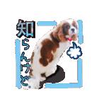 キャバリアのちゃんココvol.3優しい関西弁(個別スタンプ:29)