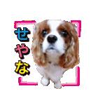 キャバリアのちゃんココvol.3優しい関西弁(個別スタンプ:30)
