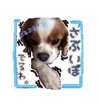キャバリアのちゃんココvol.3優しい関西弁(個別スタンプ:31)