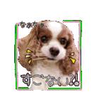 キャバリアのちゃんココvol.3優しい関西弁(個別スタンプ:32)