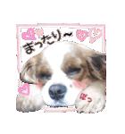 キャバリアのちゃんココvol.3優しい関西弁(個別スタンプ:33)
