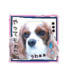 キャバリアのちゃんココvol.3優しい関西弁(個別スタンプ:34)