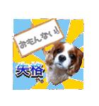 キャバリアのちゃんココvol.3優しい関西弁(個別スタンプ:38)