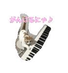 猫ピアニスト(個別スタンプ:01)