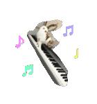 猫ピアニスト(個別スタンプ:02)