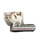 猫ピアニスト(個別スタンプ:03)