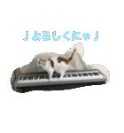 猫ピアニスト(個別スタンプ:04)