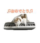 猫ピアニスト(個別スタンプ:05)