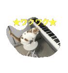 猫ピアニスト(個別スタンプ:06)