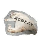 猫腹で感謝を伝えるスタンプ(個別スタンプ:01)