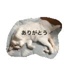猫腹で感謝を伝えるスタンプ(個別スタンプ:02)