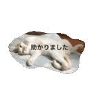 猫腹で感謝を伝えるスタンプ(個別スタンプ:04)