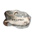 猫腹で感謝を伝えるスタンプ(個別スタンプ:05)