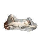 猫腹で感謝を伝えるスタンプ(個別スタンプ:06)