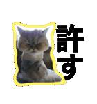ひなもか(個別スタンプ:02)