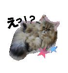 ひなもか(個別スタンプ:03)