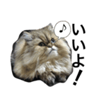 ひなもか(個別スタンプ:09)