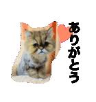 ひなもか(個別スタンプ:12)