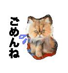 ひなもか(個別スタンプ:14)