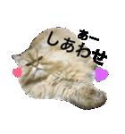 ひなもか(個別スタンプ:22)