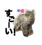 ひなもか(個別スタンプ:30)