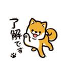 動く!柴犬マロン(個別スタンプ:01)