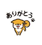 動く!柴犬マロン(個別スタンプ:07)