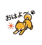 動く!柴犬マロン(個別スタンプ:09)