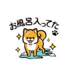 動く!柴犬マロン(個別スタンプ:21)