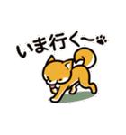 動く!柴犬マロン(個別スタンプ:22)