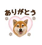 さすが!柴犬【万能型】(個別スタンプ:02)